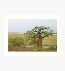 Boabab Tree Art Print