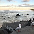 Seagull convention at Point Danger by Annie Smit