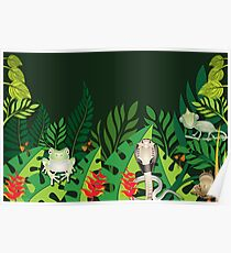 Rainforest Creatures Poster