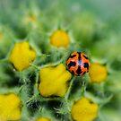 Ladybug on flower by NelehsStuff