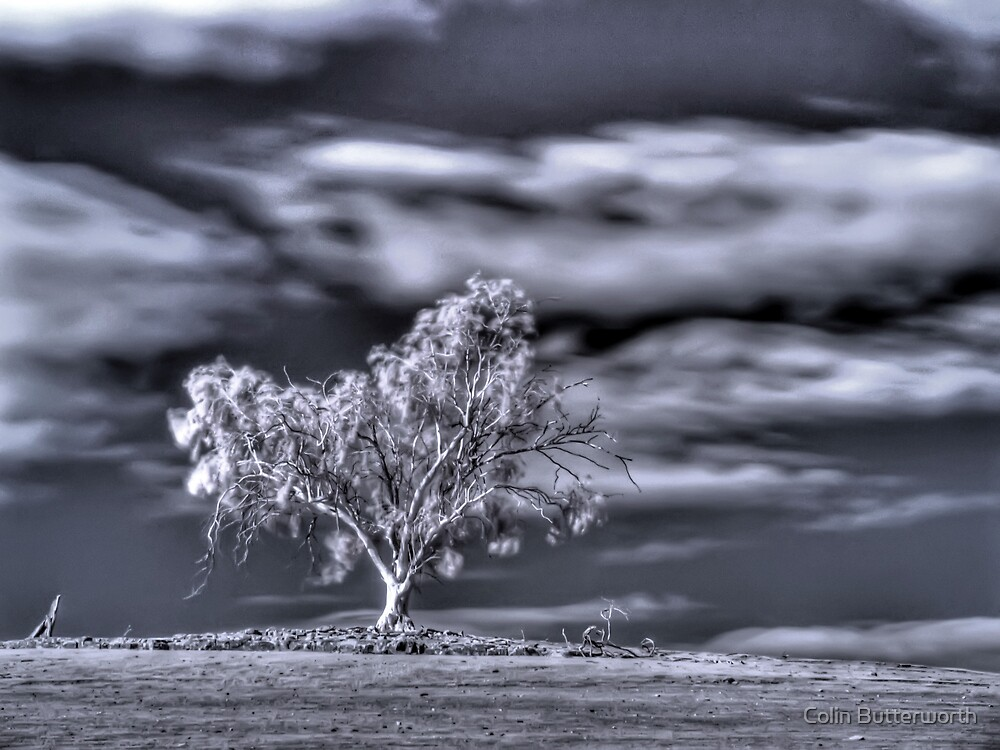 Windswept by Colin Butterworth