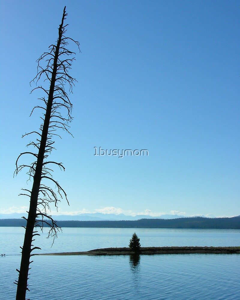 solitary tree by 1busymom