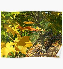 Autumn Angles Yellow Leaves Poster