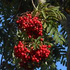 A Profusion of Berries by VoxCeleste