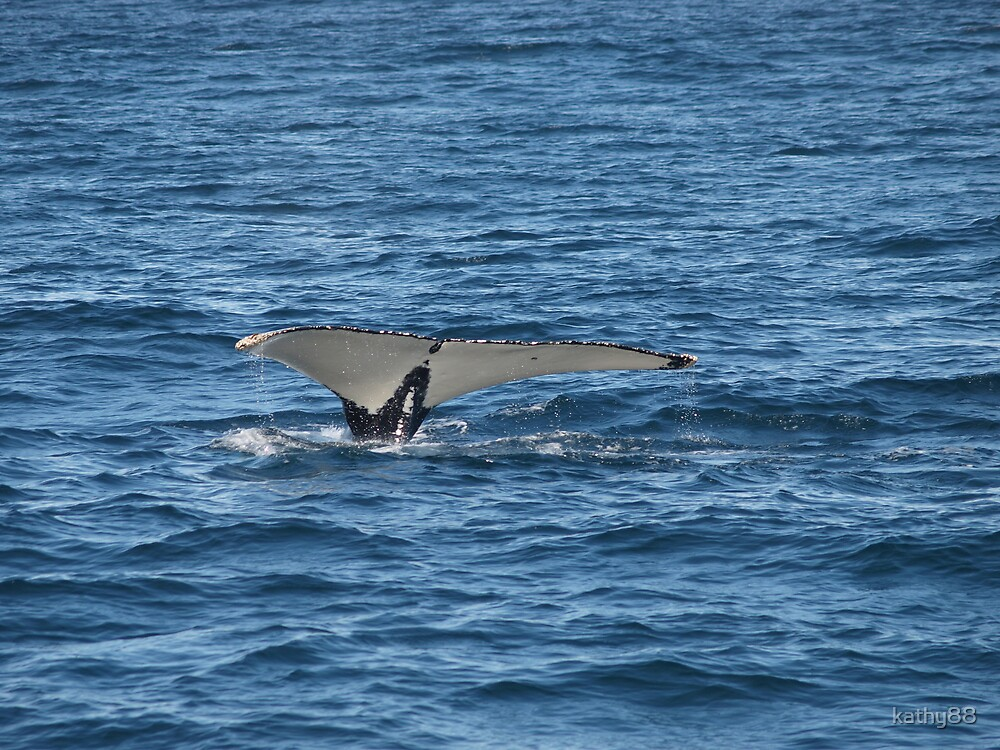 Whale Tail by kathy88