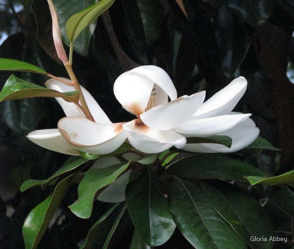 Pure Magnolia  by Gloria Abbey