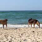 Dogs at Palm Beach by Annie Smit
