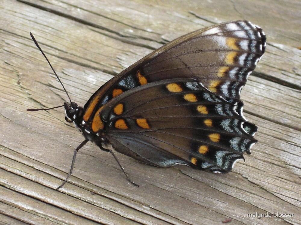 last butterfly by melynda blosser