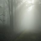 Boroka Foggy Morn by Underload