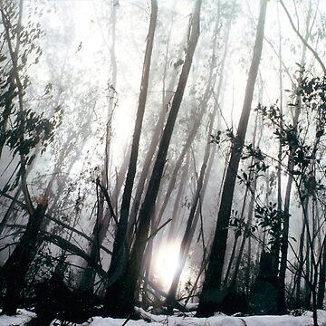 A foggy morning on Mount Buffalo  by rozmcq
