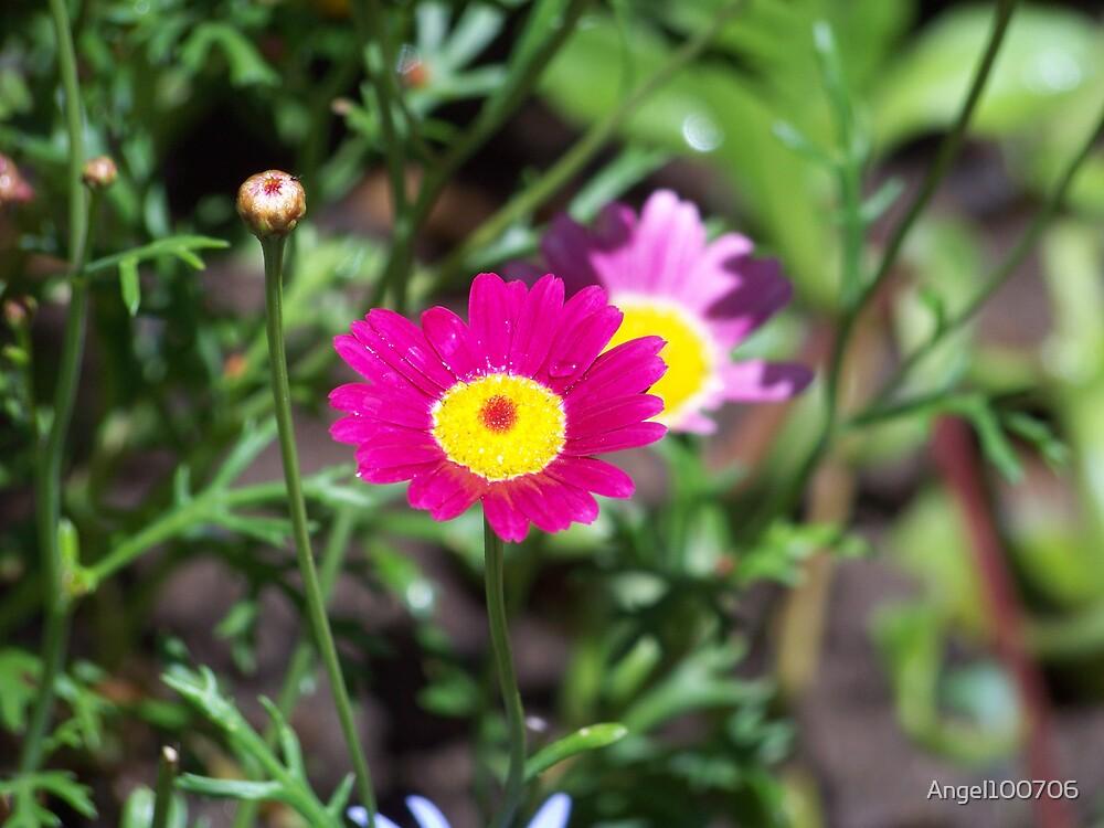 Flower by Angel100706