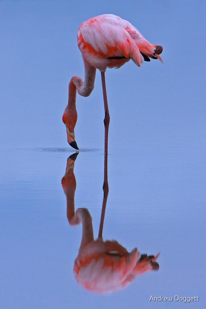 Flamingo by Andrew Doggett