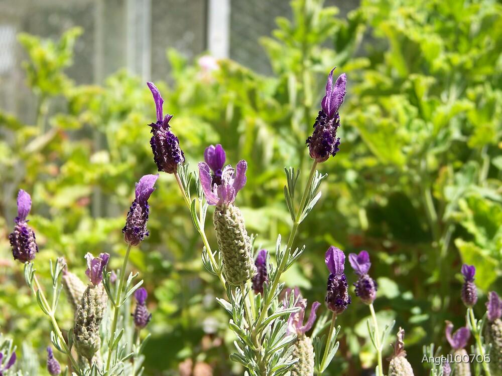 Lavender by Angel100706