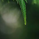Green leaf by karenanderson