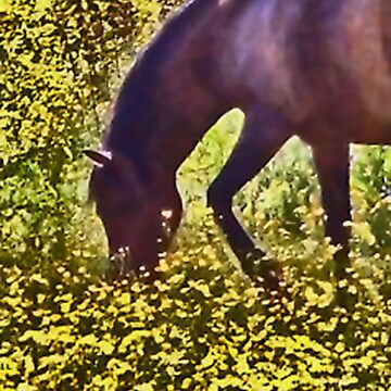 buttercup horse by louiseDIONNE