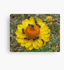 Insect attack Canvas Print