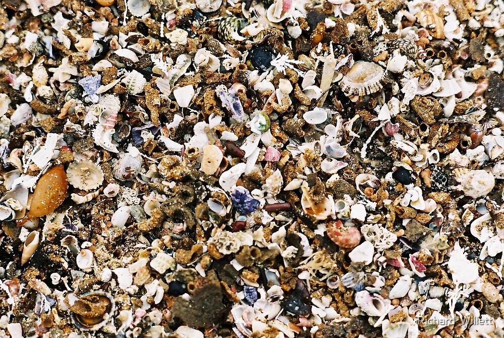 Shells on the Sea Shore by Richard  Willett