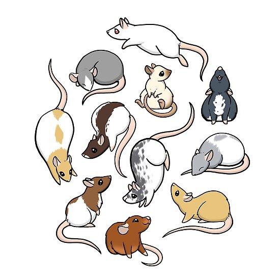 «Ratas» de Rebecca Golins