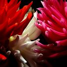 Red White Pink by jerry  alcantara