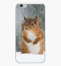 Red Squirrel in the Snow iPhone Case