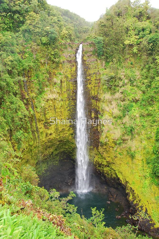 Akaka Falls by Shaina Haynes
