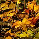Autumn leaves by Maureen Brittain