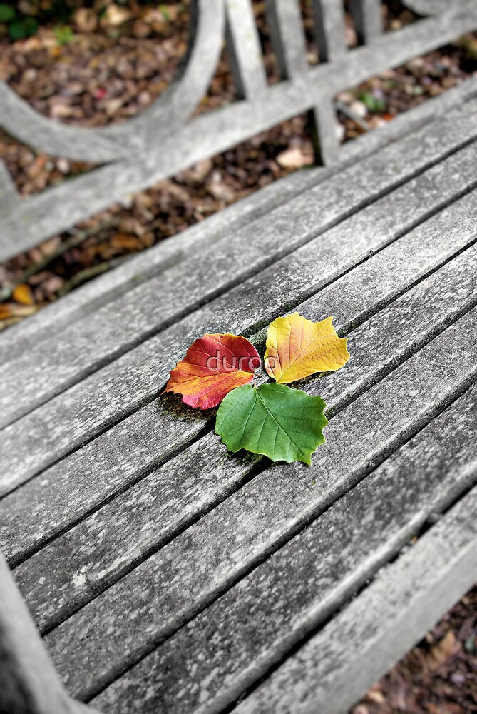 Autumn Selection by duroo