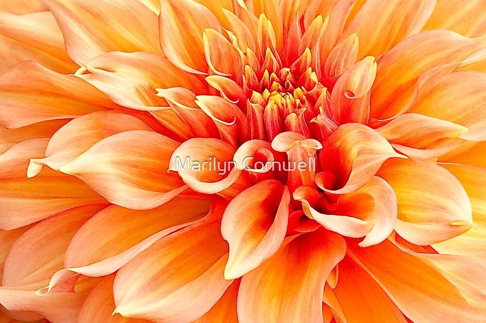 Dahlia in Orange by Marilyn Cornwell