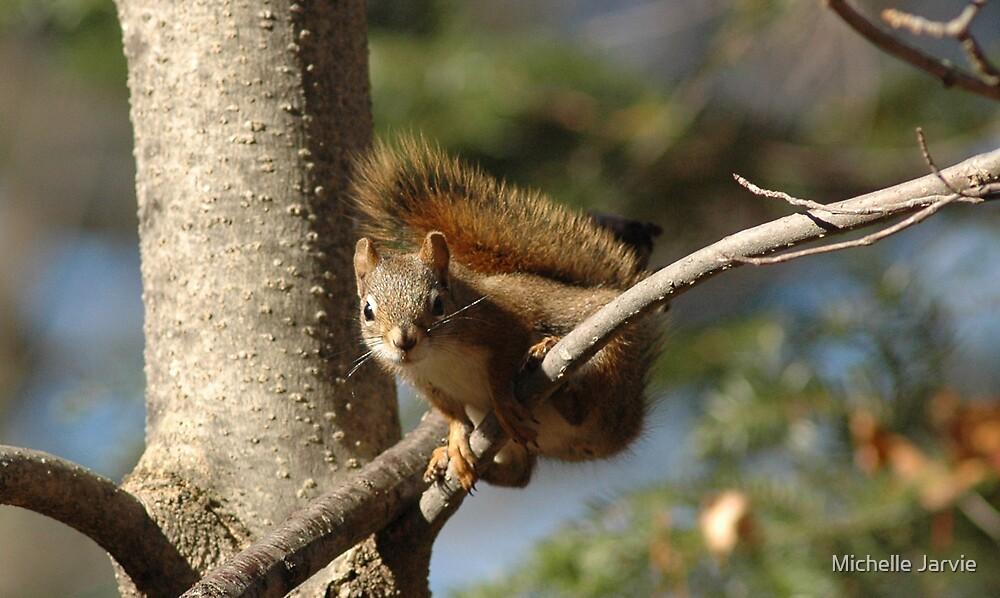 Red Squirrel by Michelle Jarvie
