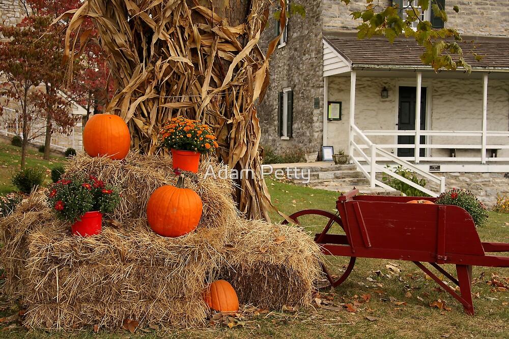 Hay! Pumpkins by Adam Petty
