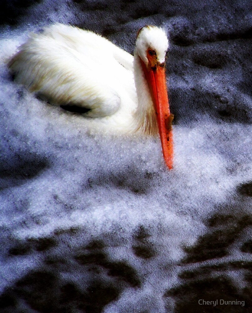 lonely pelican by Cheryl Dunning