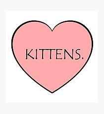 Kittens. Photographic Print