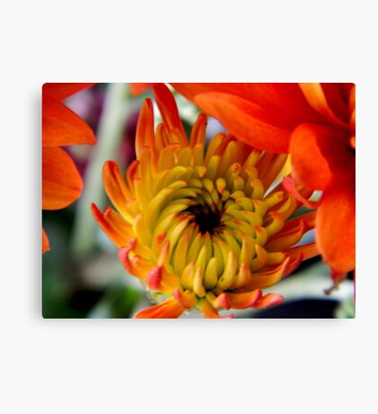 Blooming   ^ Canvas Print