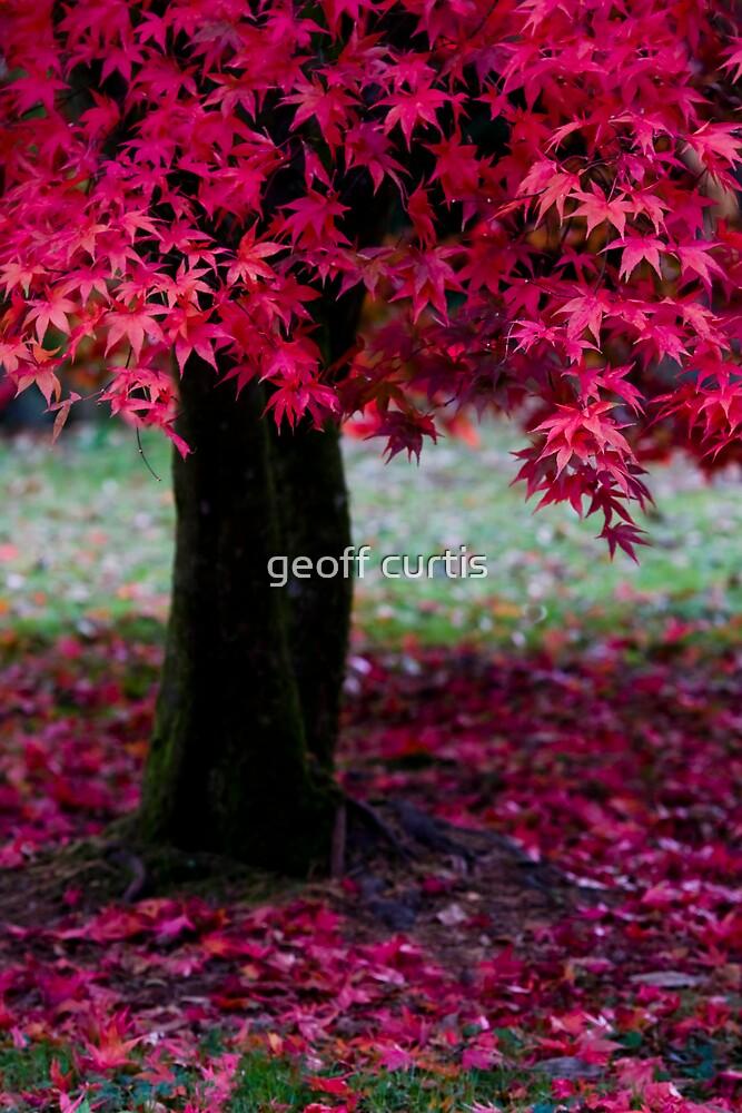Fall by geoff curtis