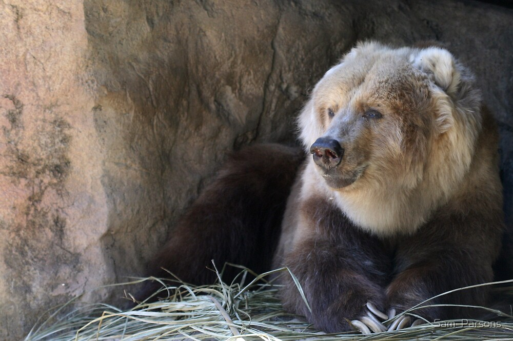 Kodiak Bear by Sam  Parsons