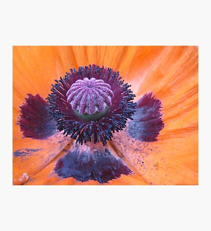 Within a Poppy Photographic Print