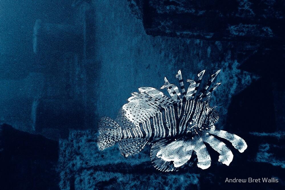 Lionfish Shipwreck by Andrew Bret Wallis