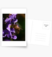 Hardenbergia - Happy Wanderer Postcards
