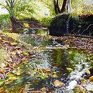 Autumn Flow by Paula Oakley