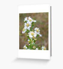 Wildflower Daisies Greeting Card