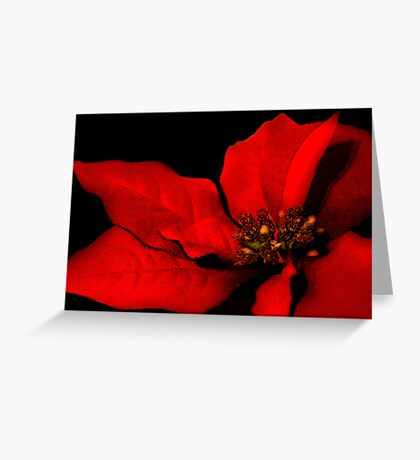 Poinsettia Passion Greeting Card