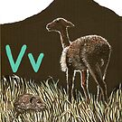 V is for Vole & Vicuna by Annie Davenport