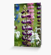 Lupin Flower Greeting Card