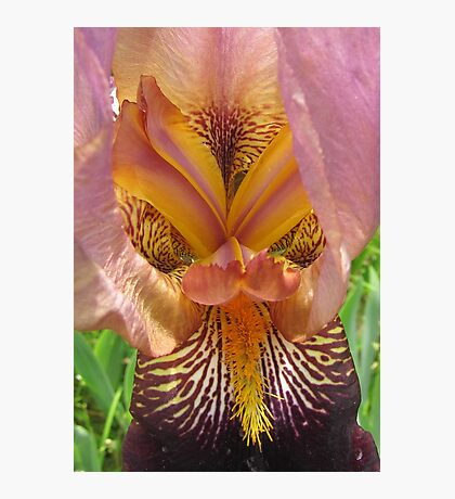 Iris in detail Photographic Print