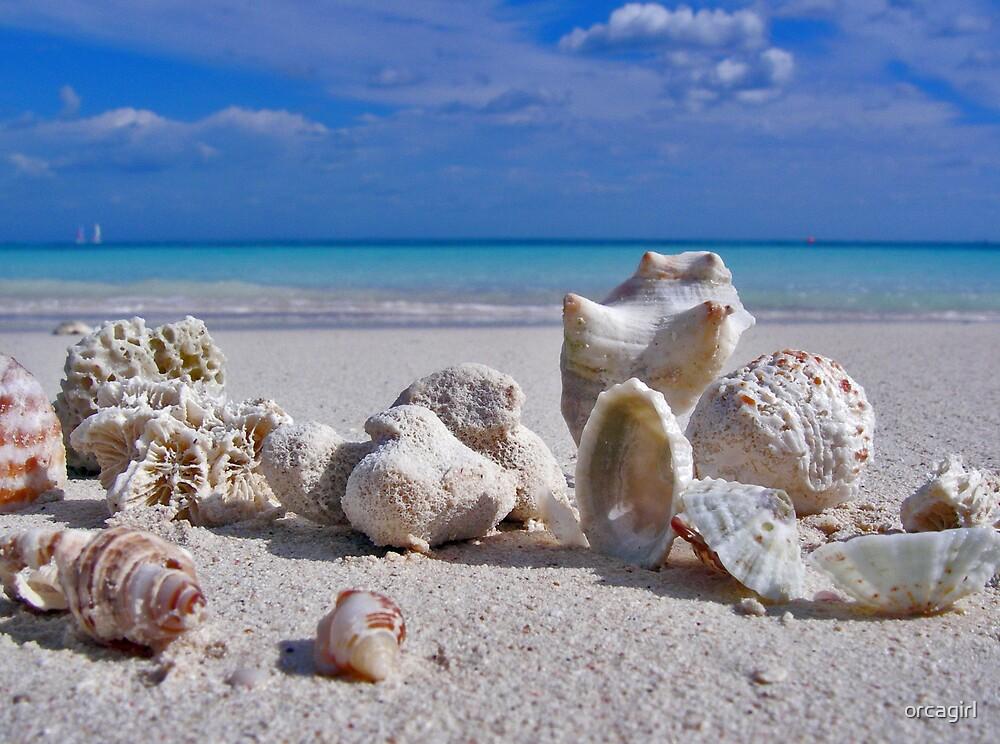 Shells by orcagirl