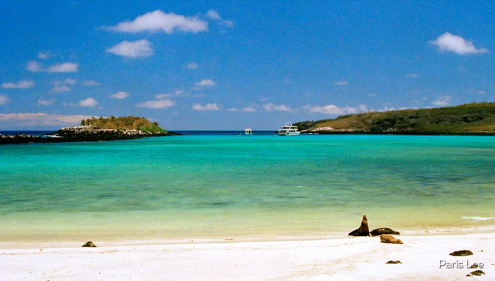 Quot Island Beach Galapagos Islands Ecuador Quot By Paris Lee