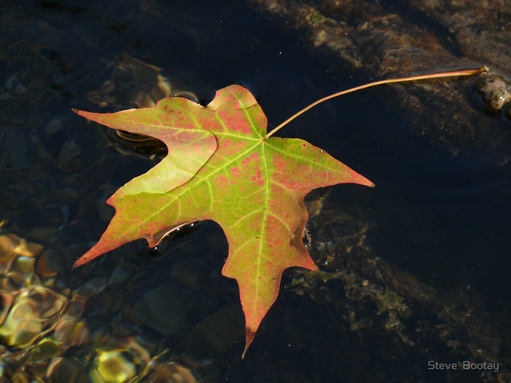 Fall from Grace by Steve  Bootay