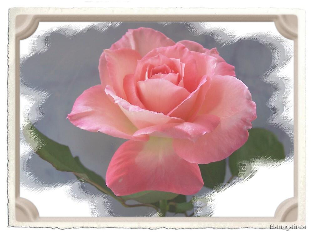 Tropicana rose by Nanagahma