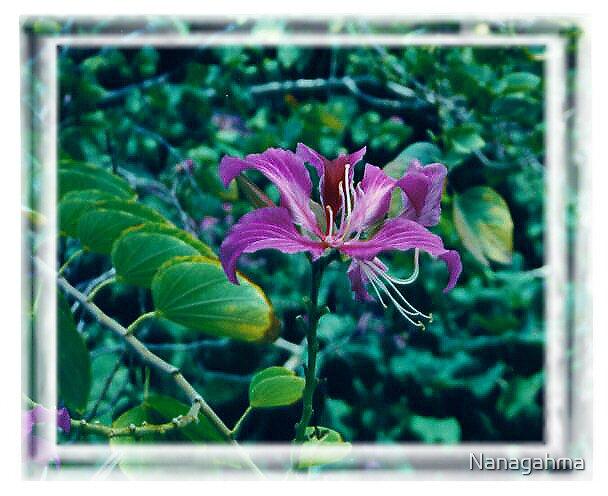 Purple Orchid, taken on Maui by Nanagahma