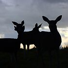 Psalm 18:33  He makes me as surefooted as a deer, enabling me to stand on mountain heights. by Laura Puglia
